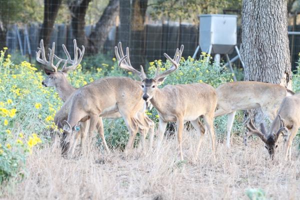 bucks 8-8-13 017