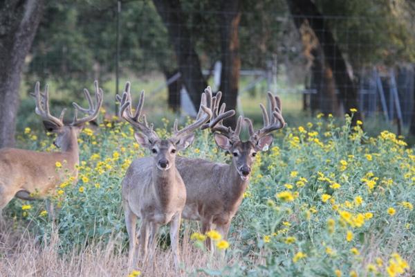 bucks 8-8-13 045