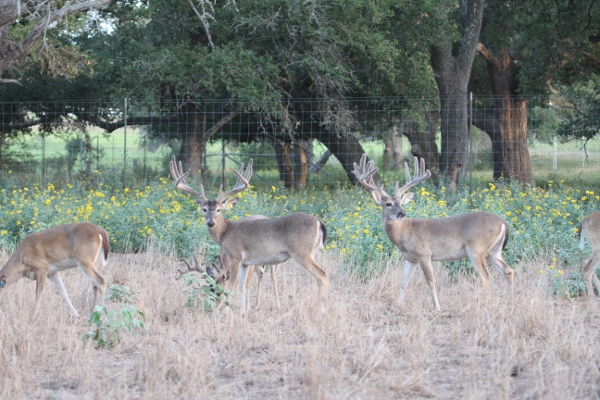 bucks 8-8-13 073