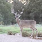 bucks 8-8-13 137